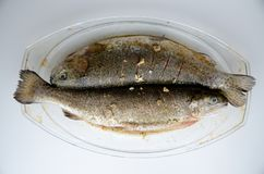 Two trouts for baking with soy sauce royalty free stock image