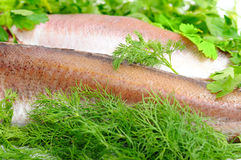 Two fishes lie in fennel and parsley Stock Photography