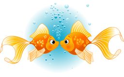 Two Fishes in love. Two Gold Fishes in love before kiss Stock Images