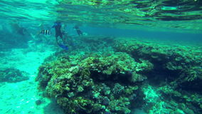 Two fishes running away from group of people in sea. Sea and water life, people having fun, sea creatures with corals. Perfect tourism themed place stock video