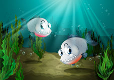 Two fishes with sharp teeth under the sea Royalty Free Stock Images