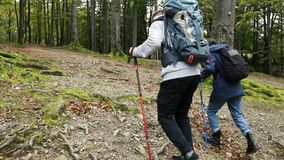 Men Goes Hiking in Forest. Two fit caucasian men going hiking in the forest, having pleasant weekend walk far away in beautiful mountains stock footage