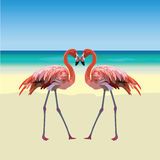 Two Flamingo Birds Forming A Shape Of A Heart Stock Photography