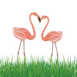 Two flamingo in love. Vector illustration Royalty Free Stock Photos