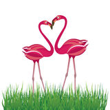 Two flamingo in love. Vector illustration Stock Photography