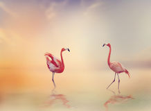 Two Flamingoes at Sunset Stock Images