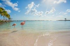 Free Two Flamingos On The Beach Stock Photo - 82382840