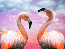 Two flamingos. And a scenic sky Stock Image