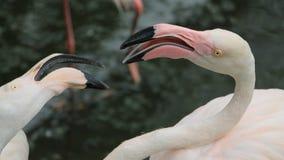 Two flamingos Stock Photos