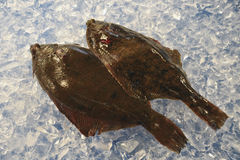 Two flatfishes Stock Photo