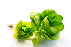 Two Fleshy Spinach Leaves Stock Photo