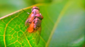 Two flies Stock Images