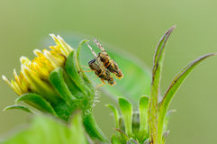 Two flies. Happy two little flies on flowers Royalty Free Stock Images