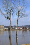 Two flooded trees Royalty Free Stock Photo