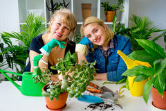 Two florists in a greenhouse Stock Image