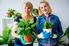 Two florists in a greenhouse Stock Images