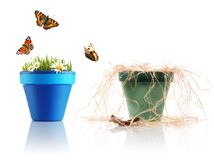 Two flower pots. Two pots: one is full of life, second is desolated Royalty Free Stock Image