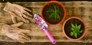 Two flowerpots, garden shovel and working gloves Royalty Free Stock Photos