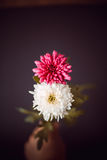 Two flowers as 8 eight number. Two flowers showing as eight number Royalty Free Stock Images