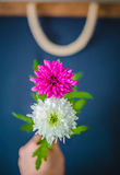 Two flowers as 8 eight number. Two flowers showing as eight number Stock Photos