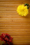 Two flowers and drops. Two yellow and magenta flowers and water drops on bamboo royalty free stock photography