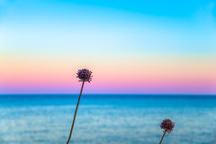 Two flowers in front of a pastel sky. And a calm sea Stock Image