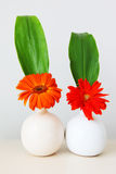 Two flowers in jug Royalty Free Stock Photos