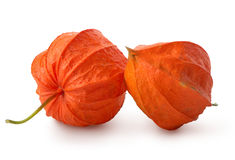 Two flowers of physalis Stock Photography