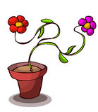 Two Flowers in a Pot. Stock Image