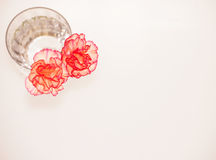 Two Flowers Royalty Free Stock Photos