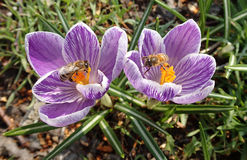 Two flowers and two insects royalty free stock photography