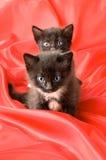 Two fluffy little kitten Royalty Free Stock Photo