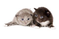Two fluffy little kitten Royalty Free Stock Photos