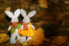 Two fluffy rabbits Royalty Free Stock Photography