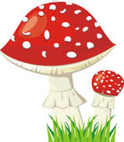 Two fly agaric Royalty Free Stock Images