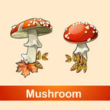 Two fly agaric closeup with a different side. And different types of leaves Stock Photos