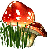 Two fly mushrooms in the grass stock illustration
