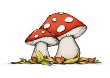 Two flying mushrooms in autumn Stock Images