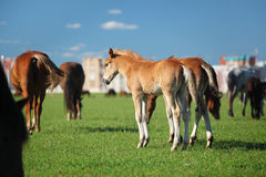 Two foals in herd. And city on background stock photos