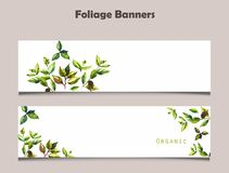 Two foliage banners with watercolor hand drawn leaves. And word Organic Stock Illustration