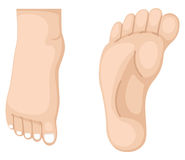 Two foot vector. Illustration of two foot vector stock illustration