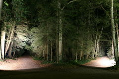Two forest paths. Among trees at night Royalty Free Stock Photo