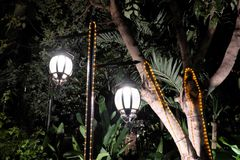 Two forged vintage lanterns illuminate the leaves of the tree. Bright light emanating from street lamps stock photo