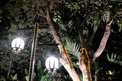Two forged vintage lanterns illuminate the leaves of the tree. Bright light emanating from street lamps royalty free stock photography