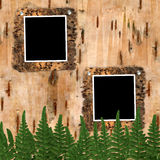 Two frame to birchen bark. With fern's leaves Royalty Free Stock Photography