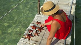 Two frames in video. The woman in a red dress sits on a pier and considers red starfishes. Red starfish. closeup. A. Two frames in video. On this video you can stock video