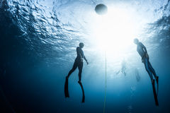 Two free divers ascending from the depth Royalty Free Stock Image