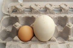 Two free-range eggs Stock Photo