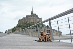 2 French Bulldog dogs sightseeing on vacation on bridge in front of famous French landmark `Le Mont-Saint-Michel` in background