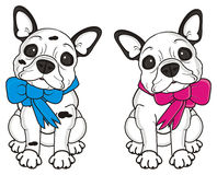 Two french bulldog puppies with ribbons Stock Image